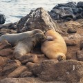 Spend your next vacation on the Galapagos Islands