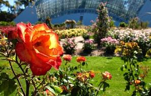 Adelaide Botanic Garden - Rose Garden