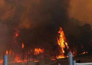 Bushfire in New South Wales