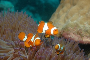 Great Barrier Reef - Fish