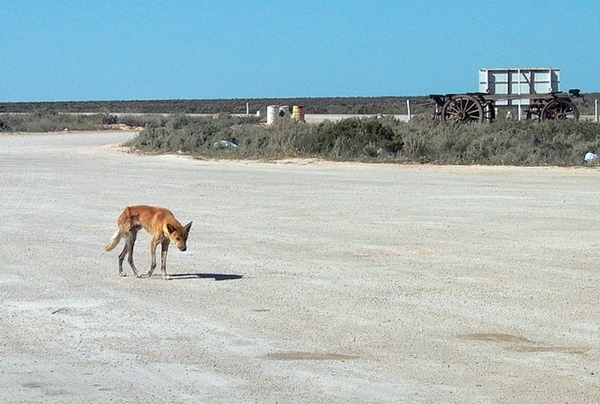nullarbor people