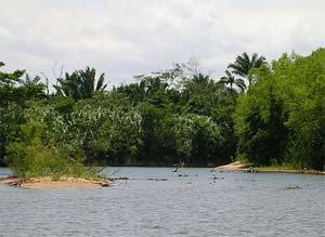 Monkey River Tour
