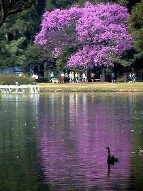 sao paulo park