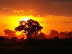 africa1.jpg