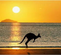australia_kangaroo2.jpg