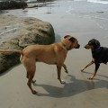 Dog Friendly Beaches in Florida