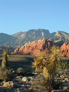 Red Rock Canyon2