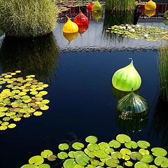 bronx-botanical-garden-pond-green