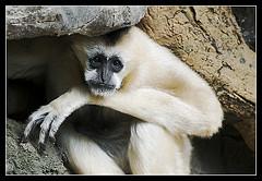 monkey-bronx-zoo
